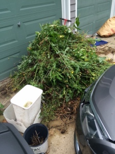 Pile of Weeds
