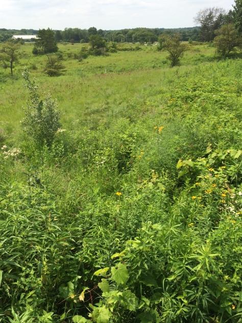 Prairie Hill