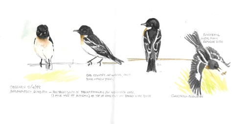 Stonechat Paintings